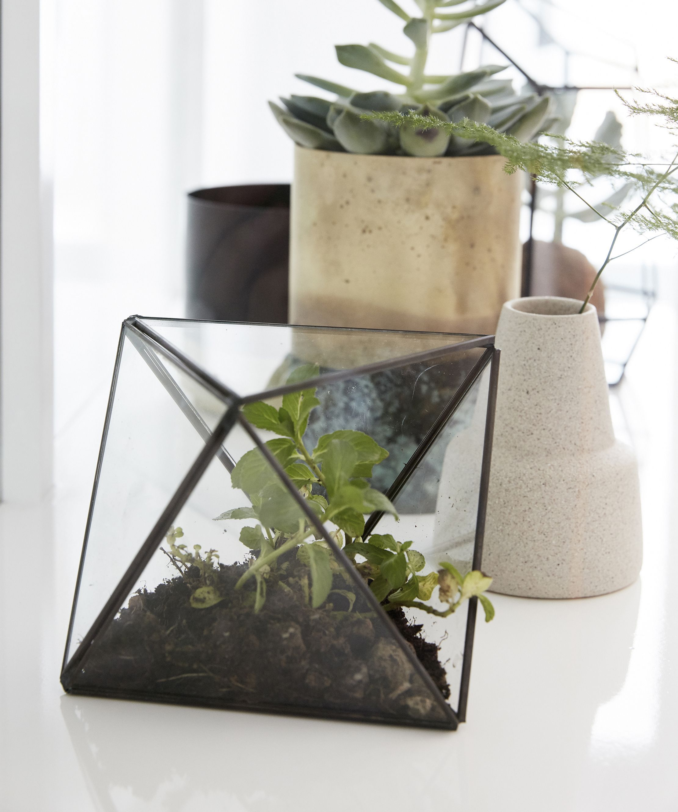 Terrarium Hübsch