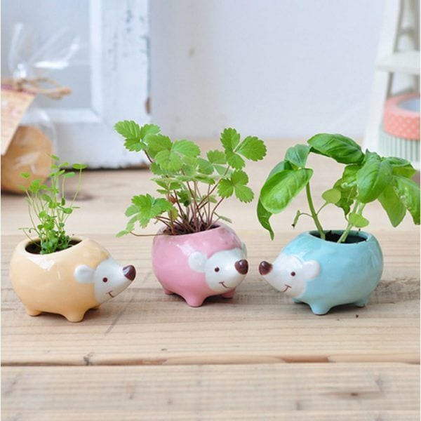 Hedgie Green - Rose - Seishin - Songes - plantes-a-faire-pousser-hedgie