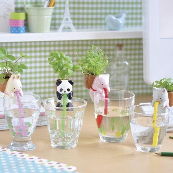 Chuppon - Panda - Seishin - Songes - chuppon_family
