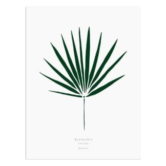 Affiche A3 - Feuille de palmier