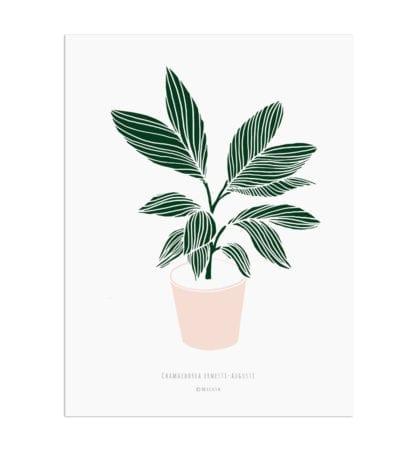 Affiche A4 - Plante