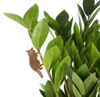 Déco pour plante - Raton laveur