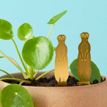 Déco pour plante - Suricate