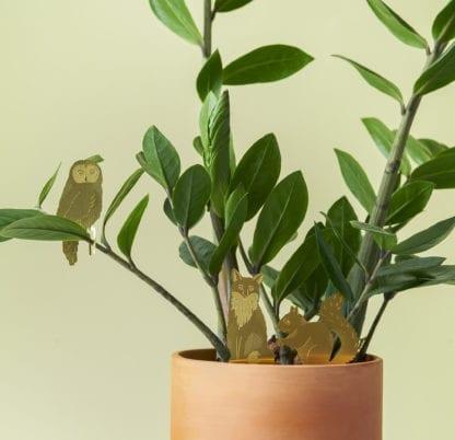 Déco pour plante