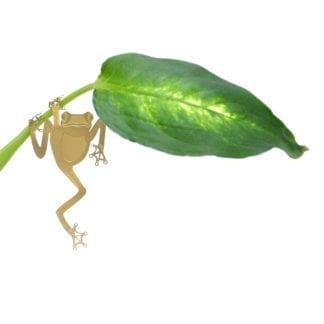 Déco pour plante - Grenouille