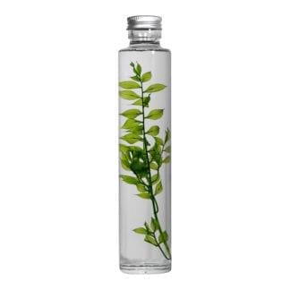 Plante en fiole M - Spécimen 4