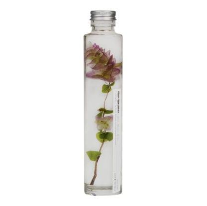 Plante en fiole M - Spécimen 5