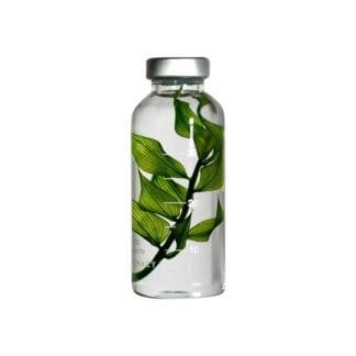 Plante en fiole S - Spécimen 10