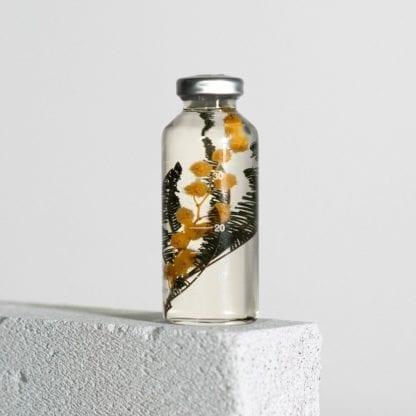 Plante en fiole S - Spécimen 20