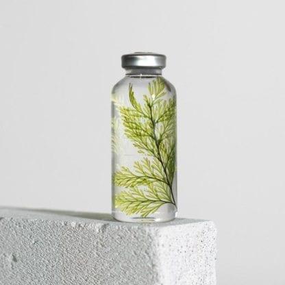 Plante en fiole S - Spécimen 21